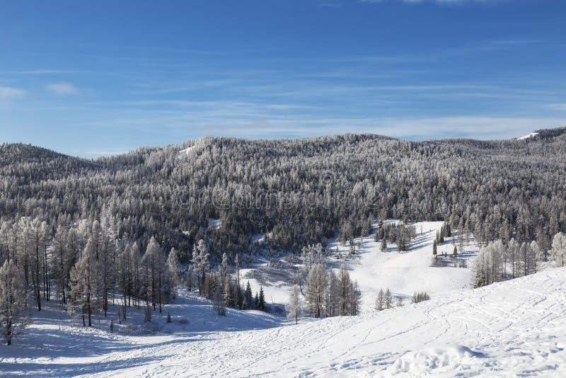 Góry Altai w słoneczny, mroźny dzień zimowy Republika Ałtajska, Syberia Zachodnia, zdjęcie royalty free