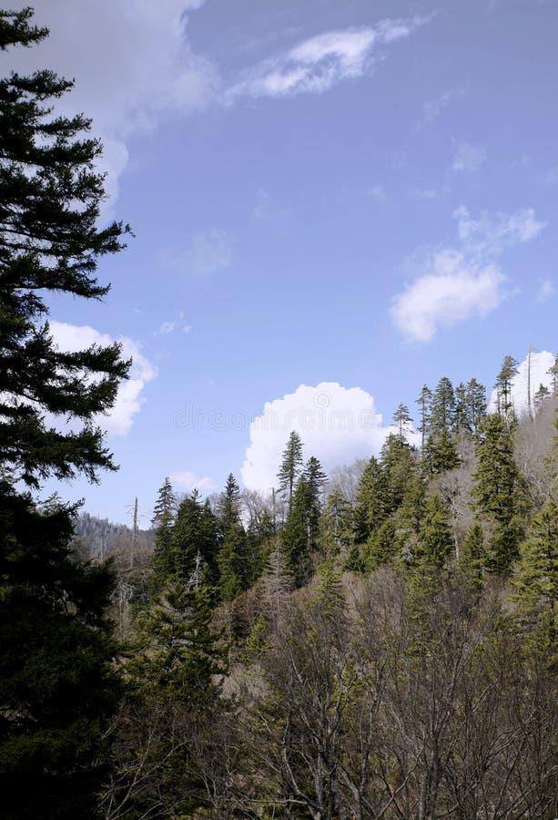 góry bocznych drzewa obraz royalty free