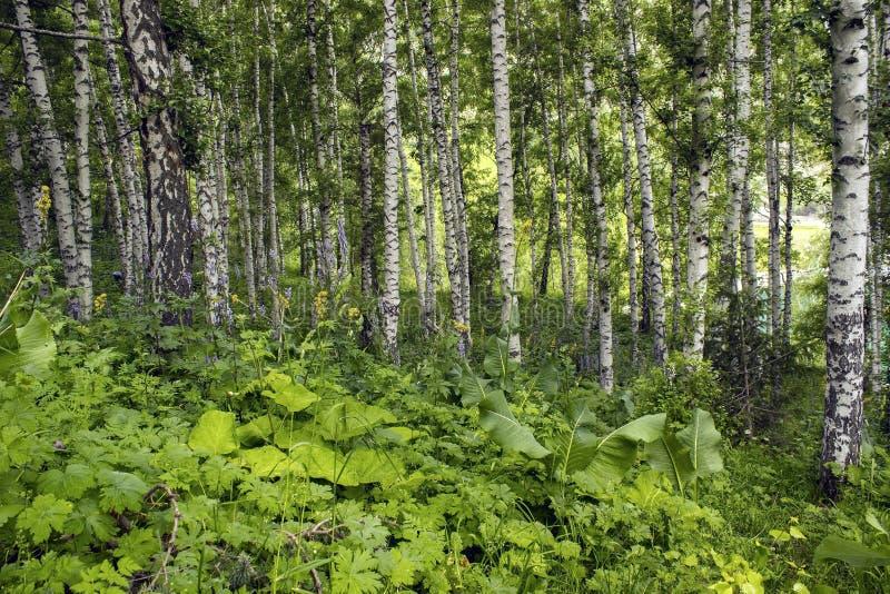 Download Góry charakteru serii lato zdjęcie stock. Obraz złożonej z trawy - 65225816