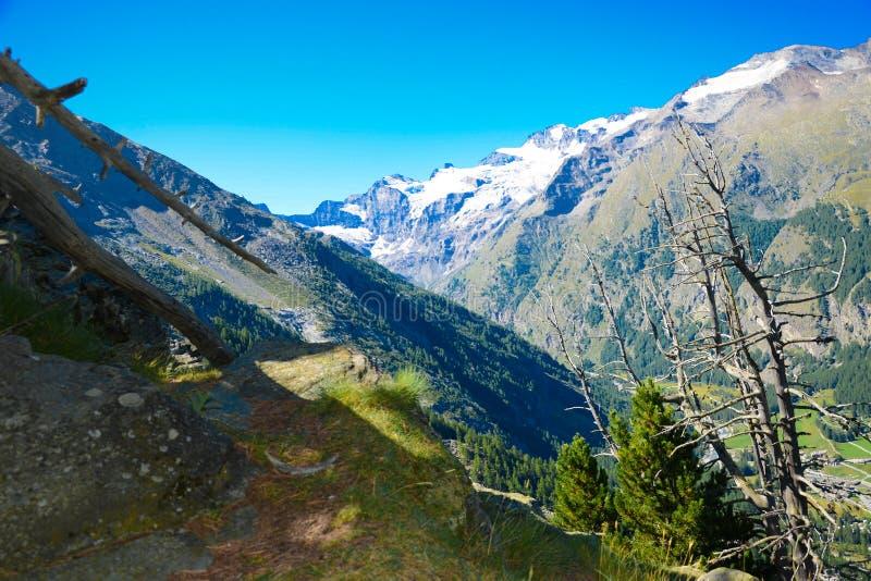 Góry I Drzewa fotografia stock