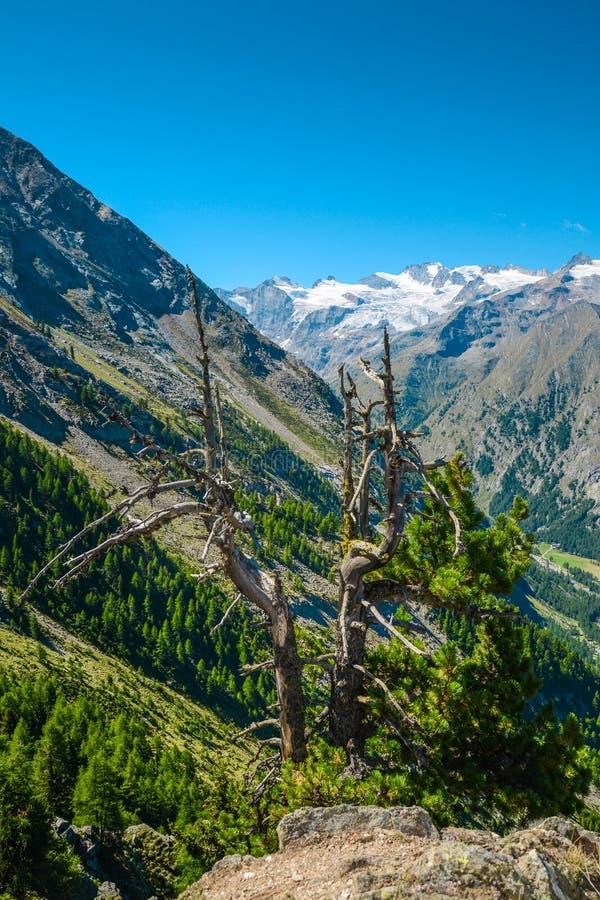 Góry I Drzewa zdjęcia stock