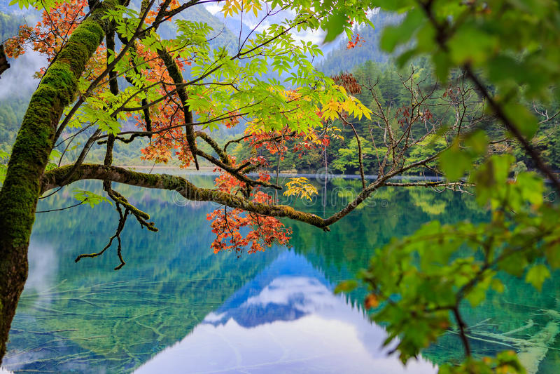 Góry i lasy obrazy stock