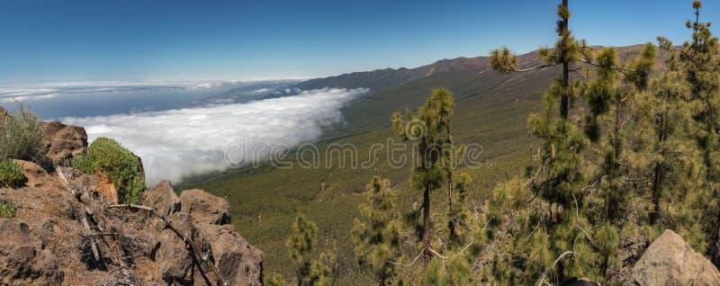 Góry i sosna lasowy pobliski wulkan Teide, częsciowo zakrywający chmurami jasne niebo niebieskie Teide park narodowy, Tenerife, zdjęcie stock