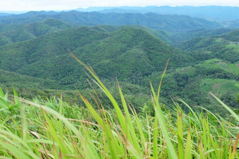 Góry i trawy przedpole fotografia stock