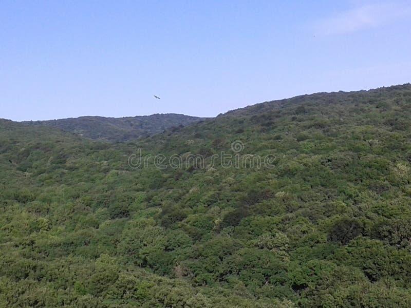 Góry i wzgórza Mieszani lasowi i dębowi lasy piękna natury młodzi dorośli błękitne niebo Ptak unosi się nad ziemia zdjęcie stock