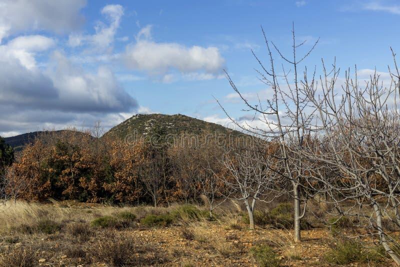 Góry na zimie, chmurzą dzień Peloponnese, Grecja zdjęcia stock