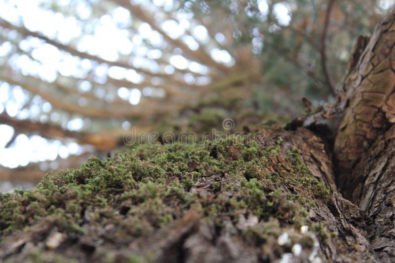 Góry rockowe I Drzewni Halni drzewa zdjęcia royalty free