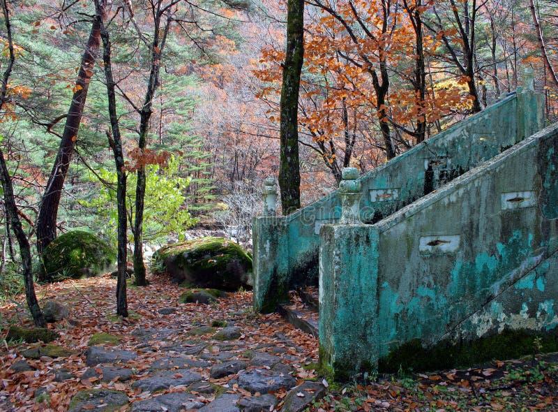 góry schodów fotografia royalty free
