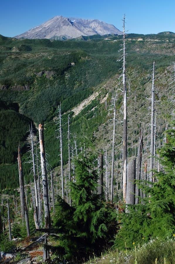 Góry St. Helens, Waszyngton, usa zdjęcie royalty free