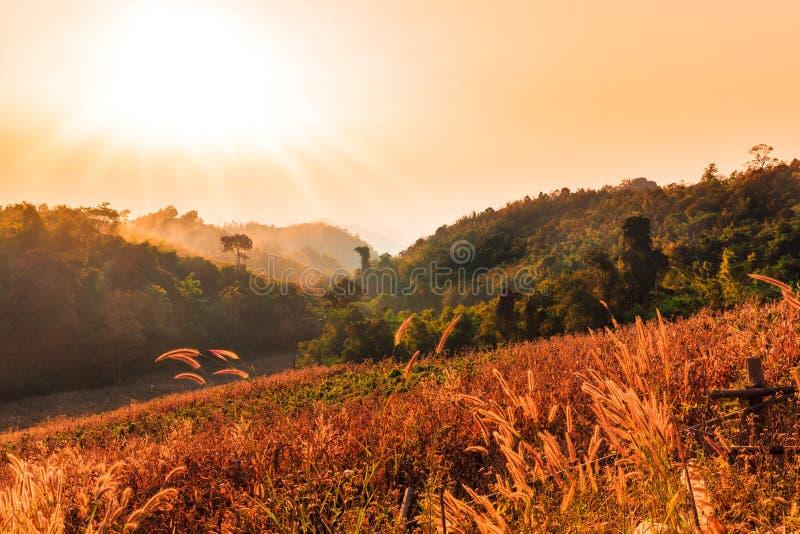 Góry z ciepłą zaświecającą trawą zdjęcie royalty free
