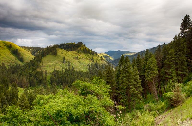 Góry zakrywać z drzewami i krzakami obraz stock