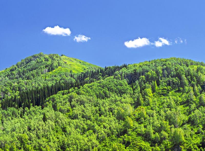 Góry Zakrywać Z Gęstym Zielonym lasem, niebieskim niebem i biel chmurami, dzień sunny lato Altai góry, Kazachstan zdjęcia royalty free