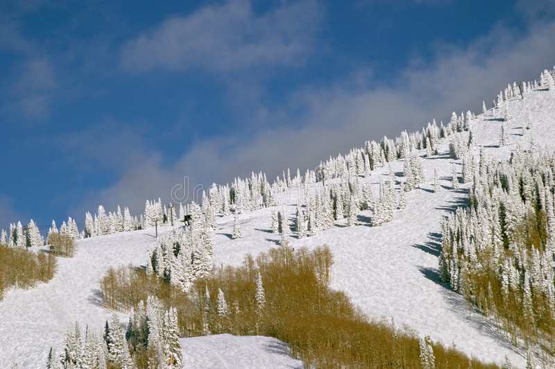 góry zboczy śnieżni drzewa zdjęcie royalty free