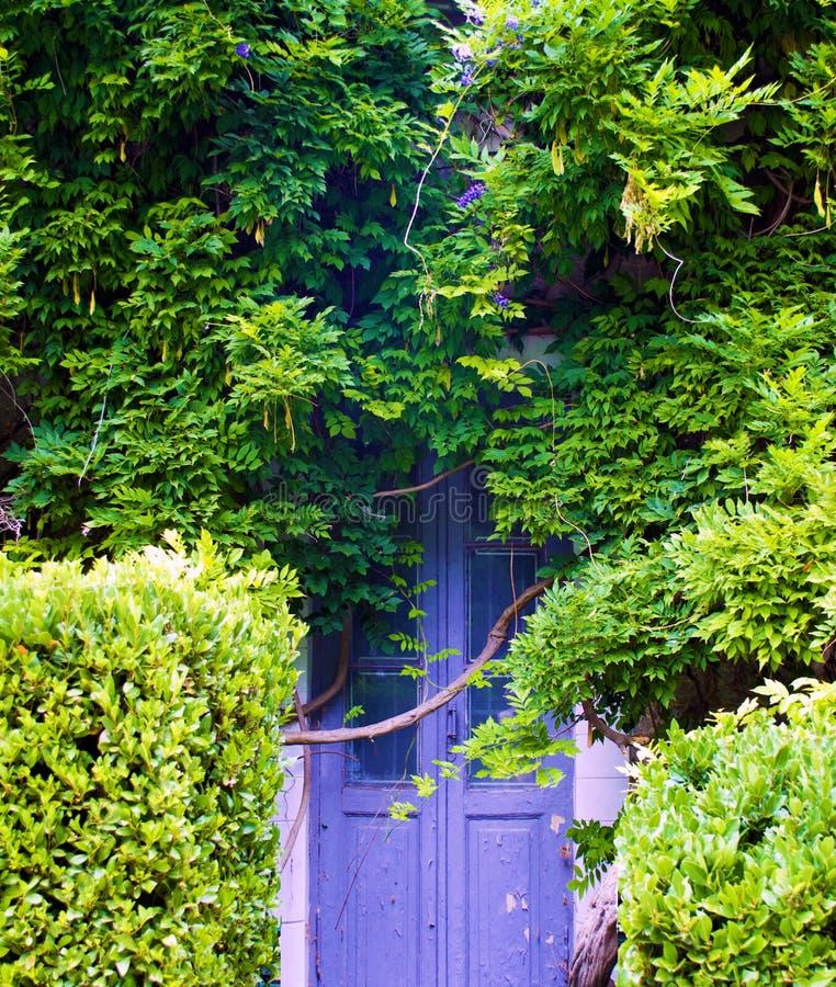 Gömd bevuxen gammal dörr arkivfoto