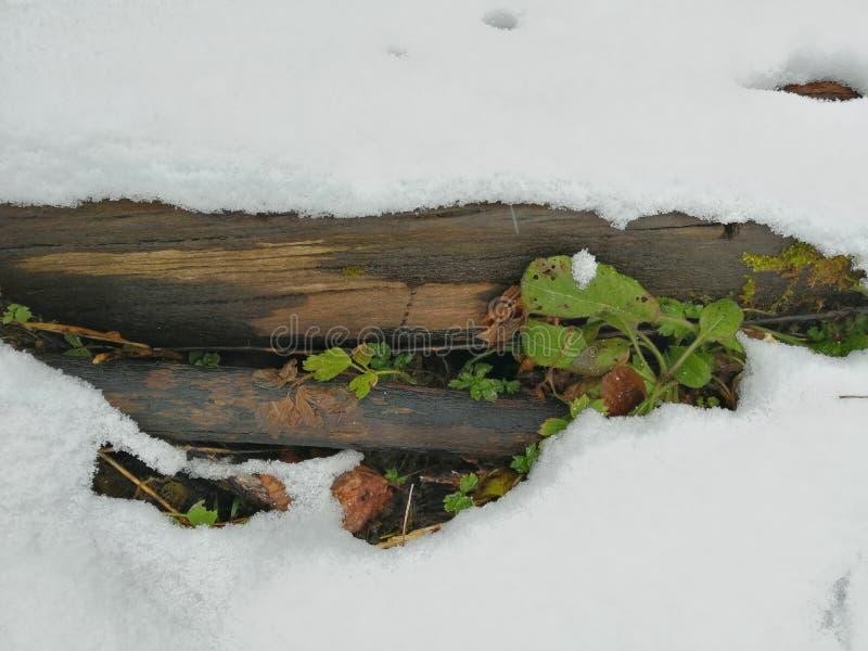 Gömda gräsplaner under en snöig filt royaltyfri bild