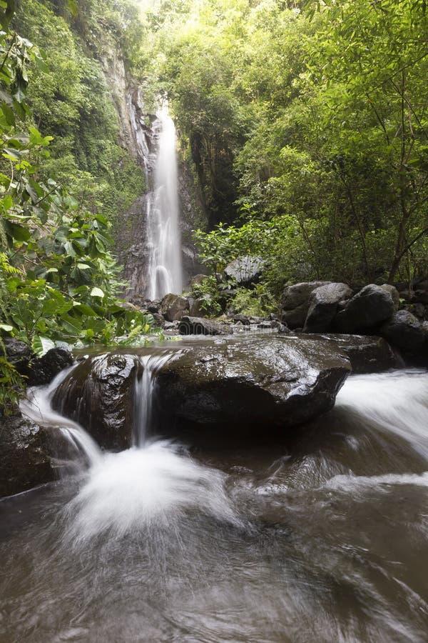 Gömda härliga vattenfall på norr Bali arkivbilder