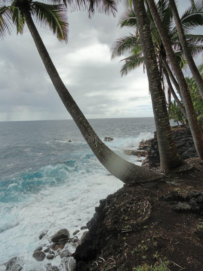 Gömma i handflatan att nå ut som omfamnar turkoshavet på den stora ön av Hawaii fotografering för bildbyråer