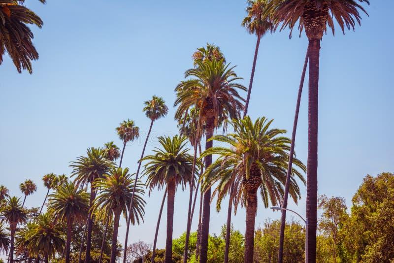 Gömma i handflatan av Beverly Hills Los Angeles California arkivbilder