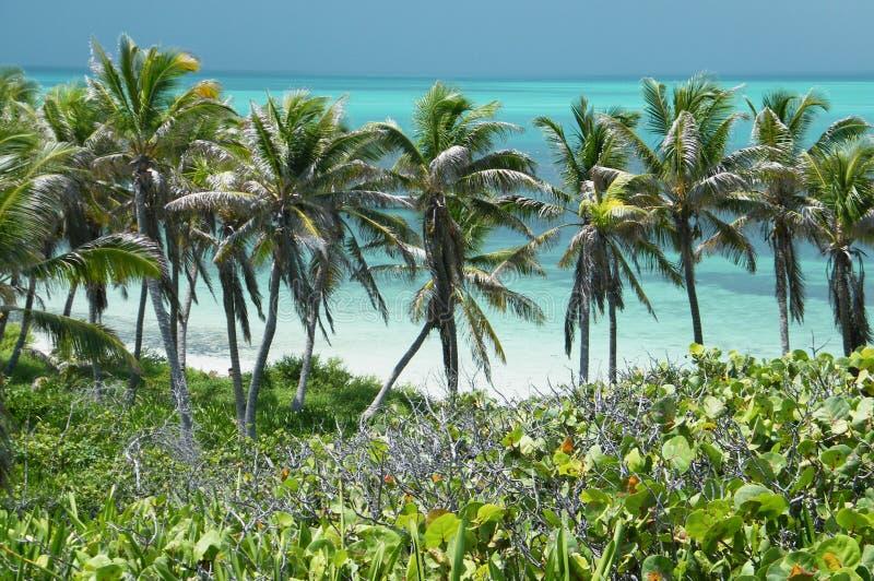 Gömma i handflatan av Cancun arkivbild