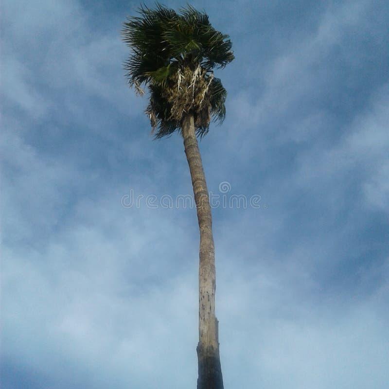 gömma i handflatan den enkla treen arkivfoto