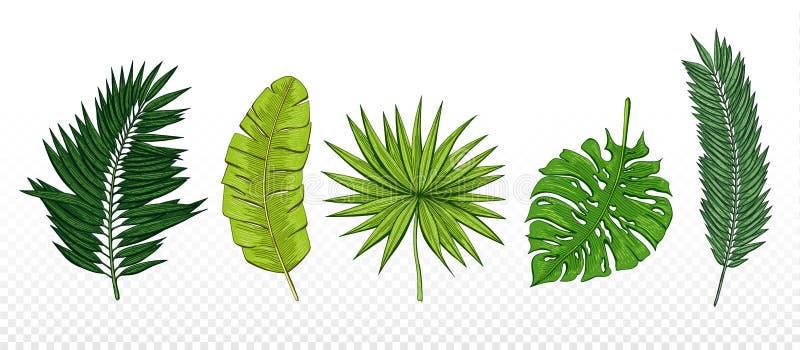 Gömma i handflatan den gröna handen drog uppsättningen med tropiska sidachamaerops, banan, chamaedoriaen, monstera designbestånds vektor illustrationer