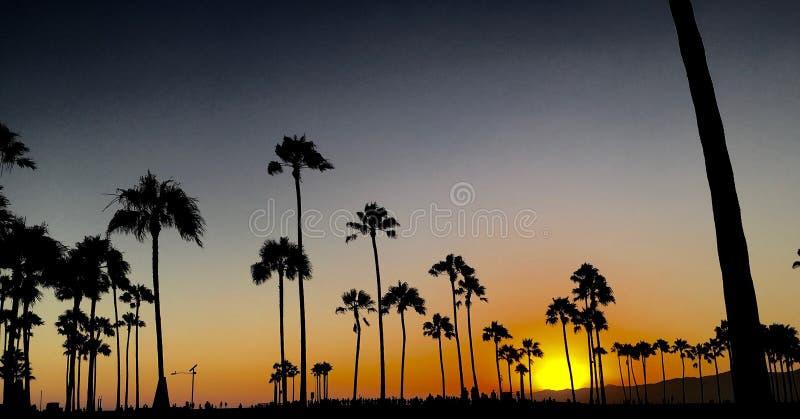 gömma i handflatan den härlig frambragda bilden för datoren förgrund för solnedgångtree för foto realistiska trees royaltyfri foto