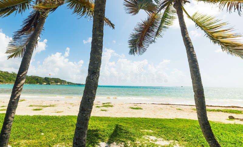 G?mma i handflatan i den Pointe de la Saltdam stranden i Guadeloupe under en gl?nsande sol arkivbild
