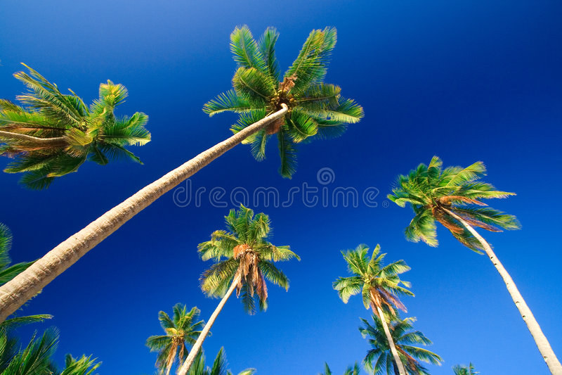 Gömma I Handflatan Den Tropiska Paradistreen Arkivbilder