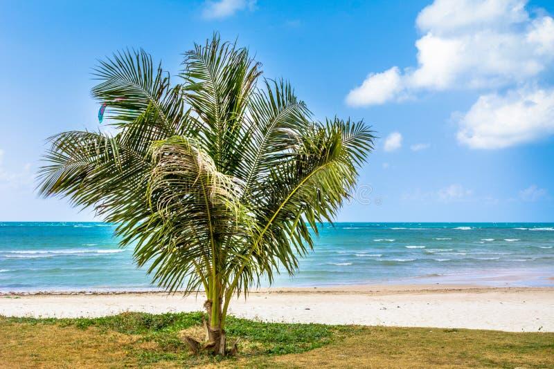 Gömma i handflatan, det vitt sand, havet och gräs royaltyfri fotografi