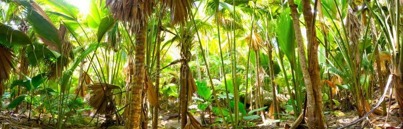 Gömma i handflatan djungelpanorama royaltyfri fotografi