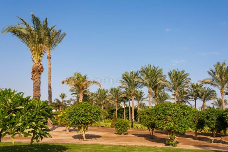 gömma i handflatan dungen i Egypten på kusten av Röda havet royaltyfria foton