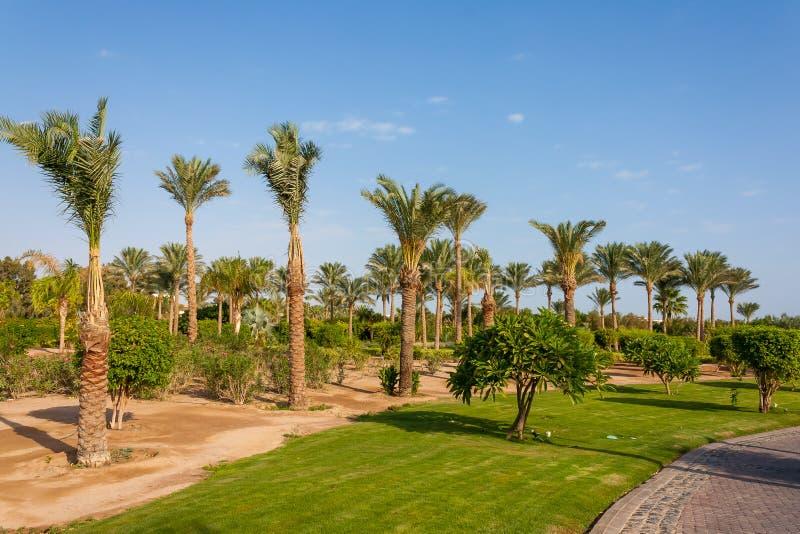 gömma i handflatan dungen i Egypten på kusten av Röda havet royaltyfria bilder