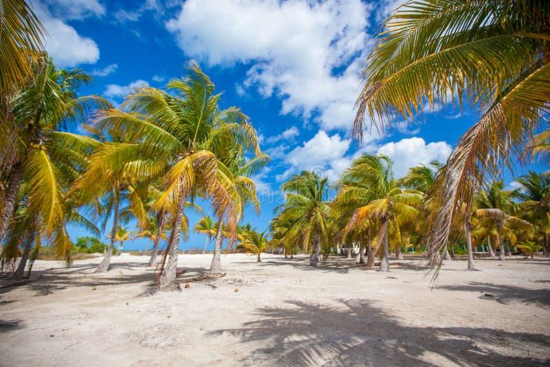 Gömma i handflatan dungen på den sandiga tropiska stranden på exotiskt arkivfoton