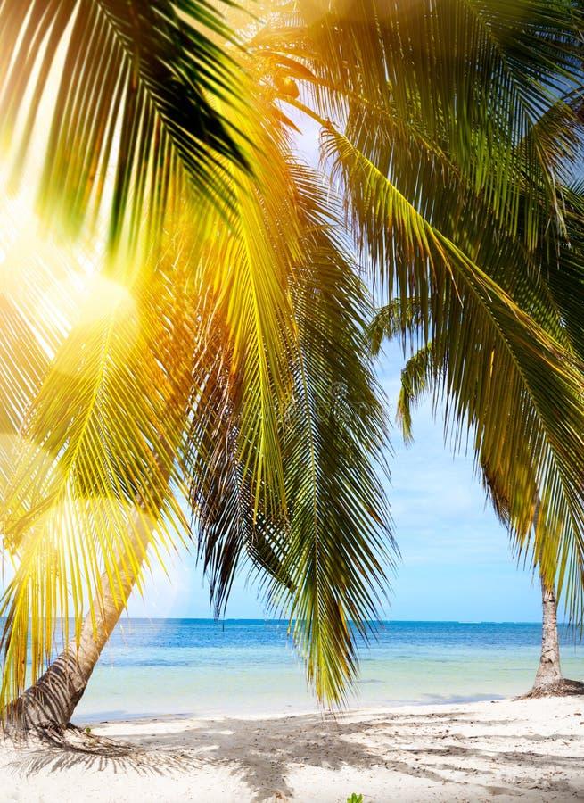 Gömma i handflatan fjärden; Tropisk strand för sommar; arkivbilder