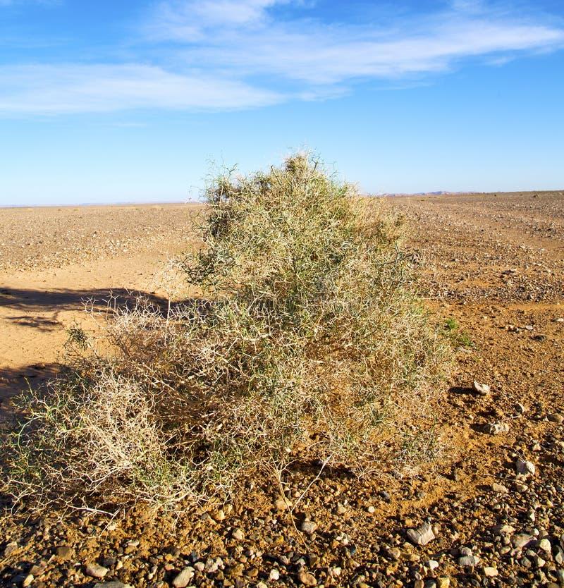 gömma i handflatan i den Marocko sahara africa för ökenoa-si dyn arkivfoto