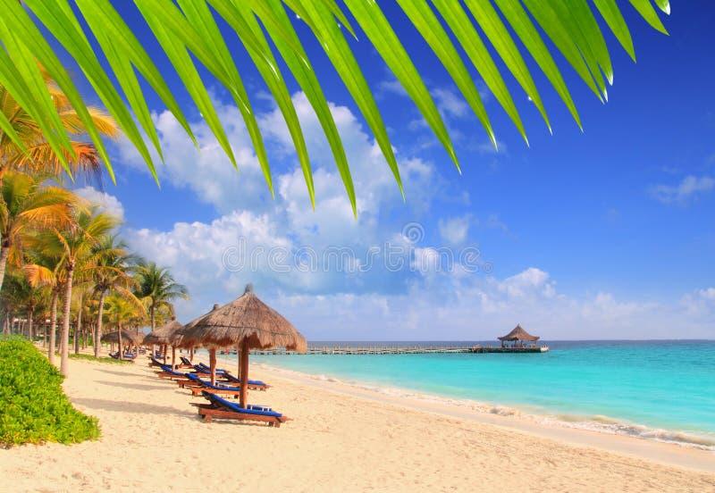 gömma i handflatan karibiska mayan för strand riviera sunrooftrees royaltyfria bilder