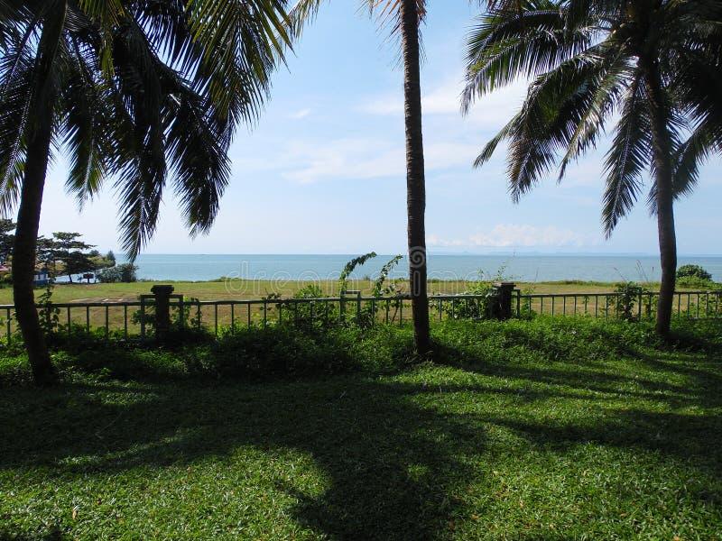 Gömma i handflatan kokospalmen, exotiskt soligt landskap med havssikt Grönt gräs, blått hav och himmel ljus sun fotografering för bildbyråer