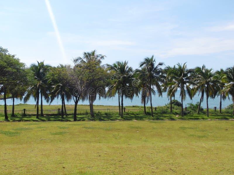 Gömma i handflatan kokospalmen, exotiskt soligt landskap med havssikt Grönt gräs, blått hav och himmel ljus sun royaltyfri fotografi