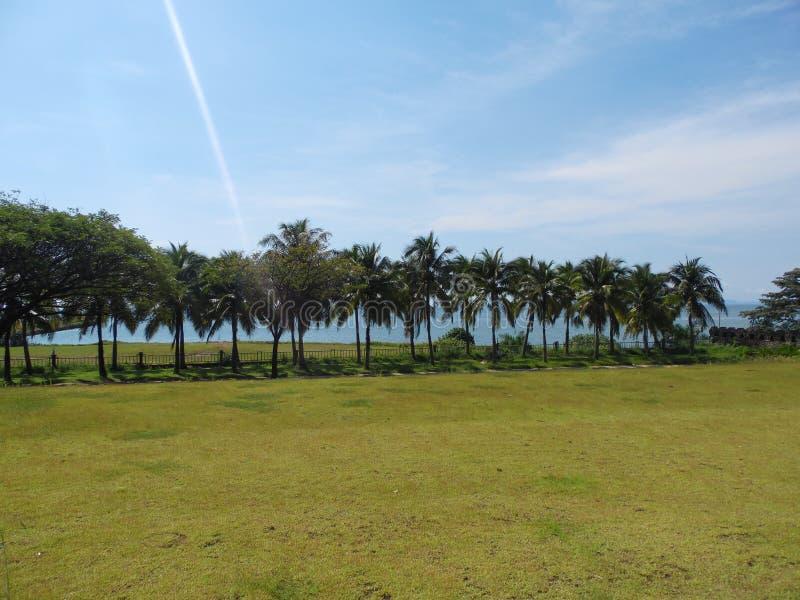 Gömma i handflatan kokospalmen, exotiskt soligt landskap med havssikt Grönt gräs, blått hav och himmel ljus sun arkivfoton