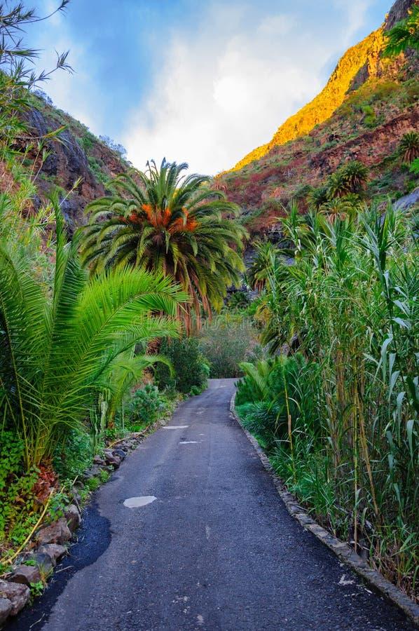 Gömma i handflatan med en väg nära den Masca byn med berg, Tenerife, C royaltyfri fotografi