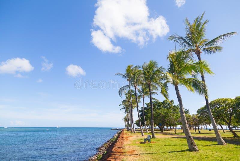 Gömma i handflatan near vatten för dungen på den tropiska ön, Hawaii, USA arkivfoto