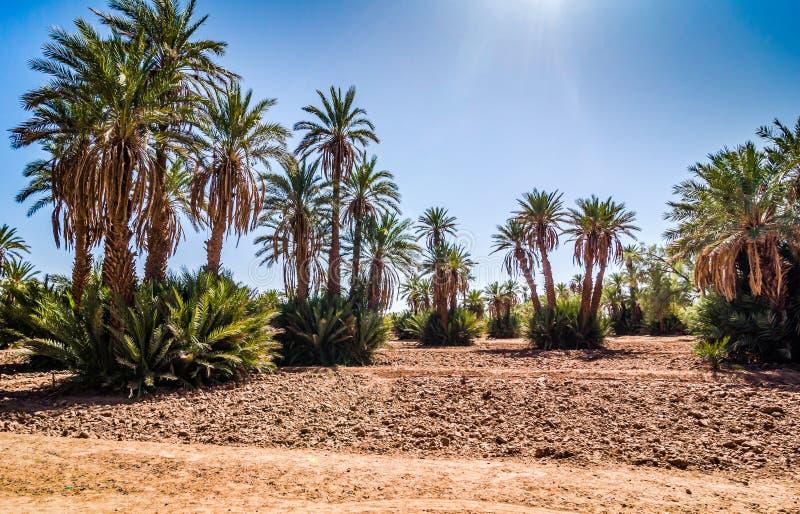 Gömma i handflatan oasen i öken nära till byn Mhamid i Marocko arkivfoto