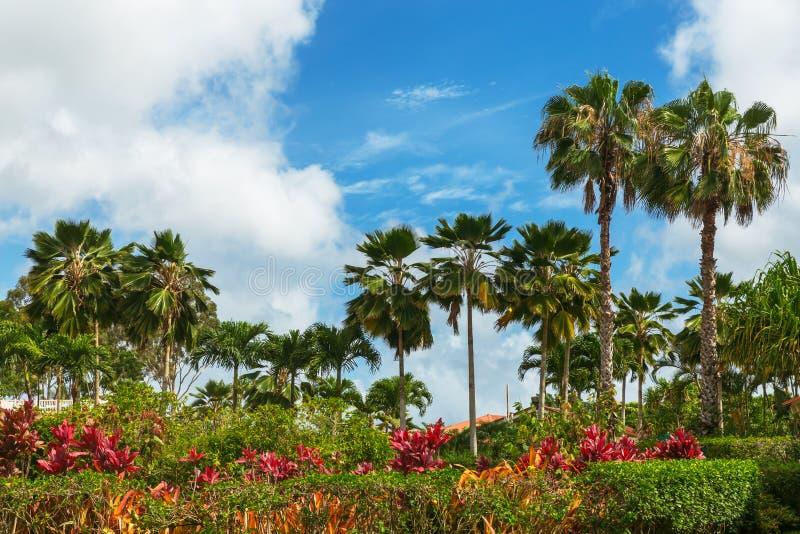 Gömma i handflatan och färgrika växter i tropisk trädgård och livlig blå himmel arkivbild