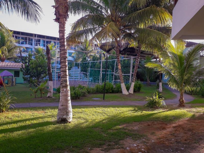 Gömma i handflatan och träd i plan semesterort av Brasilien royaltyfria foton