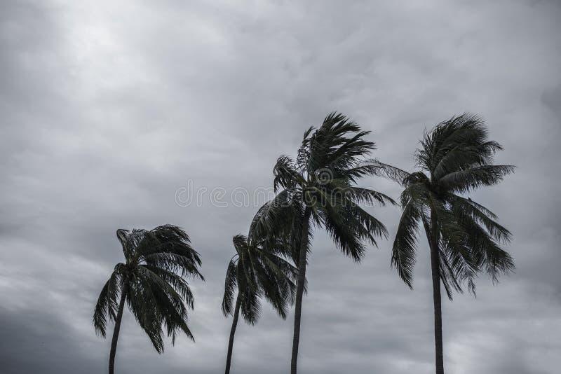 Gömma i handflatan på orkanen royaltyfria bilder
