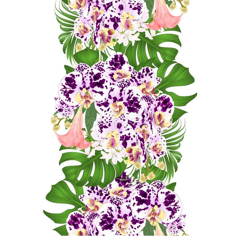 Gömma i handflatan sömlös bakgrund för gränsen med blom- ordning för tropiska blommor, med den härliga prickiga orkidén, philoden stock illustrationer