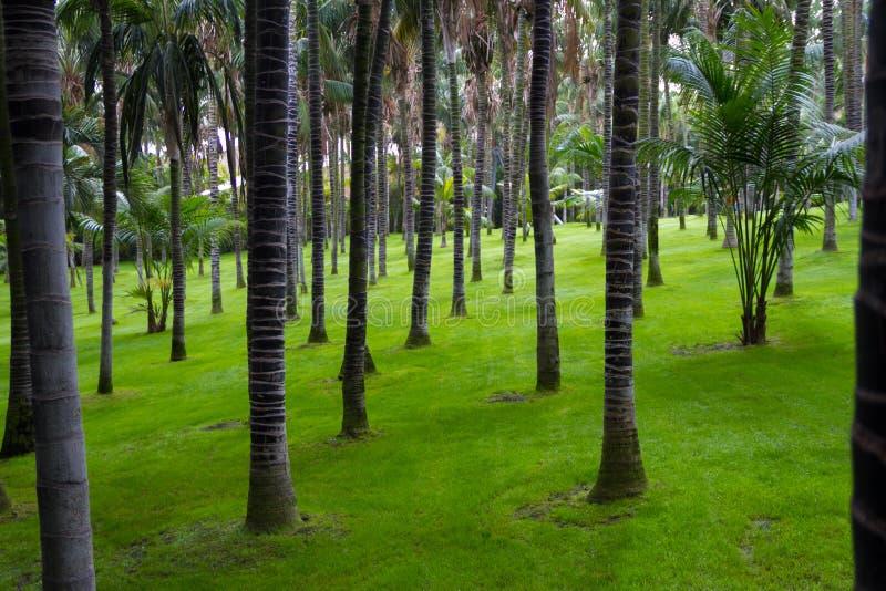 Gömma i handflatan skogen i Loro parkerar royaltyfria foton