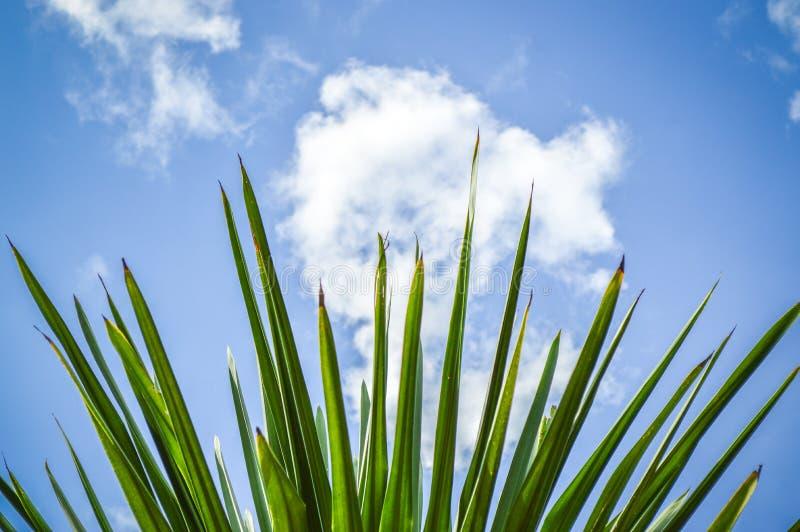 Gömma i handflatan tjänstledigheter, molnet och blå himmel royaltyfri bild