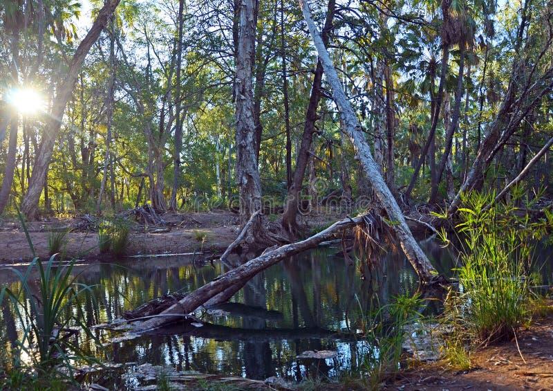 Gömma i handflatan, träd och solsken längs den tropiska Queensland floden royaltyfri foto