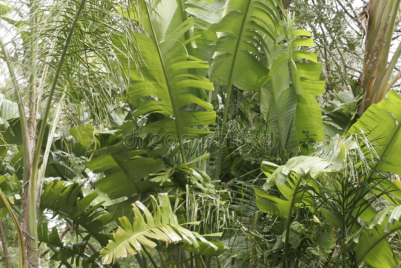 gömma i handflatan tropiska sydney arkivbilder
